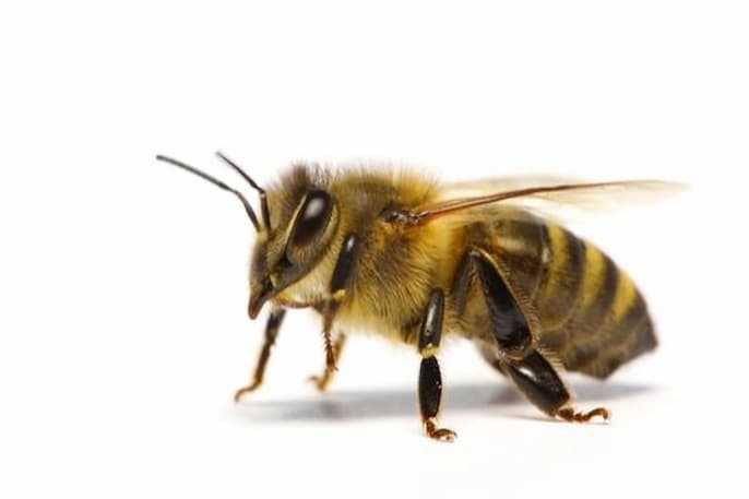 What are invertebrate animals