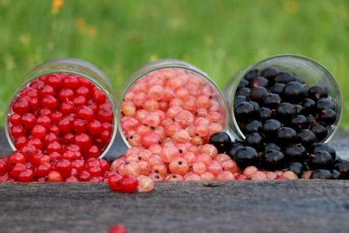 Blackcurrant Benefits